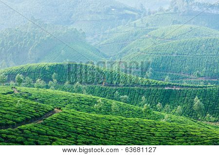 Kerala India travel background - green tea plantations in Munnar, Kerala, India in morning mist