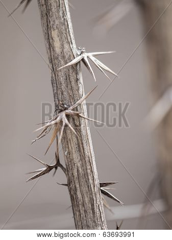 Close up of thorns