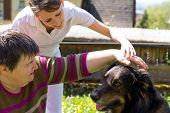 stock photo of working animal  - animal assisted therapy with a half breed dog - JPG