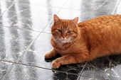 Beautiful furry cat on the marble tile