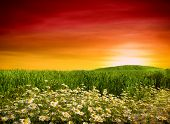 pic of wildflowers  - Summer wildflowers in wheat field - JPG