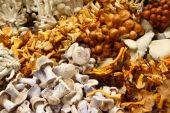 picture of crimini mushroom  - Display of edible mushroom varieties picked and ready for market - JPG