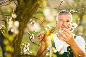 image of hoe  - Portrait of a handsome senior man gardening in his garden - JPG
