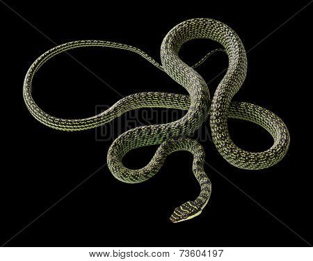 Green Snake On Black Background