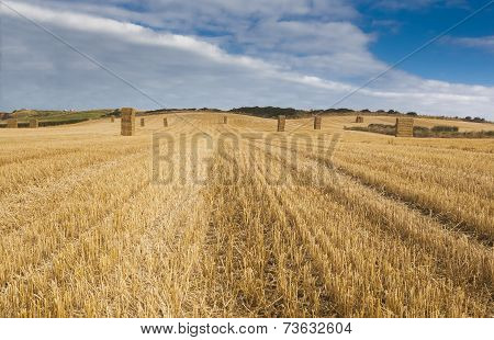 Farmer Field,yorkshire, Stacked Straw Balesc