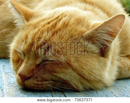 red cat sleeping on the bench