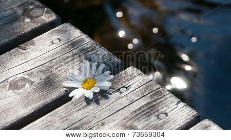 Flower at pier