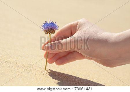 Flower On A Sand