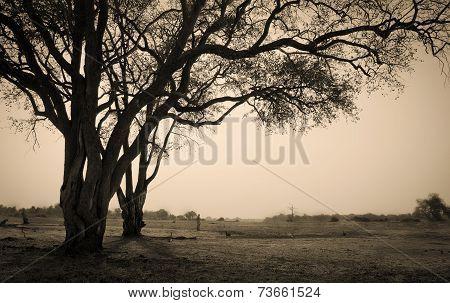 Stark African landscape