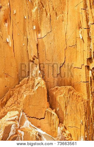 Natural Texture. Heartwood