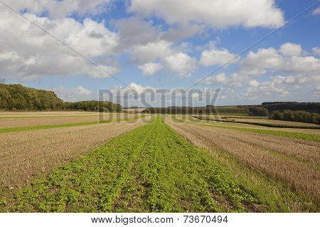 Autumn Farmland