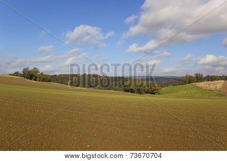 Yorkshire Wolds Landscape