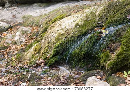 Water flowing through moss on the stone