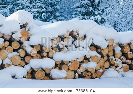 The Cut Logs In A Winter Wood Under Snowdrifts