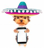 image of mexican-dog  - cute puppy dog wearing a mexican hat holding phone with empty white screen - JPG