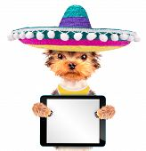 pic of mexican-dog  - cute puppy dog wearing a mexican hat holding blank tablet pc - JPG