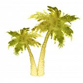 image of washingtonia  - watercolor palm trees over white background - JPG