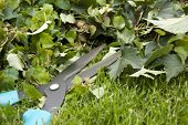foto of english ivy  - Working in the garden - JPG