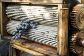 picture of crusher  - Ripe grape between the grinding cylinders of a manual grape crusher used in wine preparation - JPG