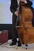 picture of double-bass  - image of a man playing on a double - JPG