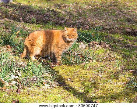 Red Cat