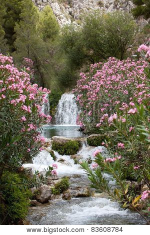 Pink Flower Plants And Trees At The Water Falls