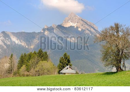 House In Greenery Landscape