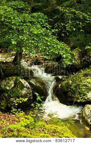 Creek at the foot of Tara mountain and national park