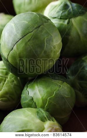 Brussel Sprouts Macro
