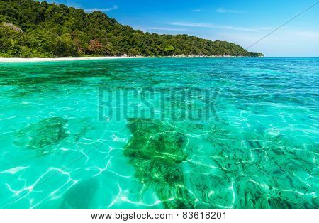 Coral Reef Under Crystal Clear Sea At Tropical Island Andaman Sea, Thailand