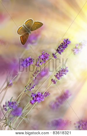 Butterfly and lavender lit by sunbeams