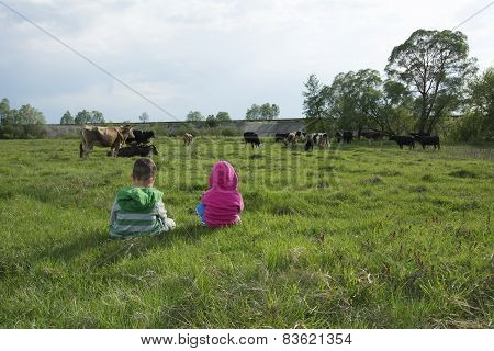 Little Boy And Girl In The Meadow Grazing Cows.