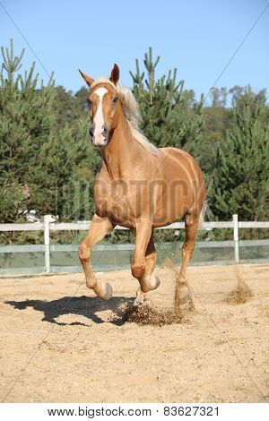 Amazing Palomino Warmblood Running