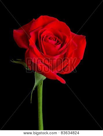 Red Rose Solitaire