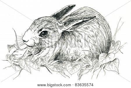 Black and white cute rabbit