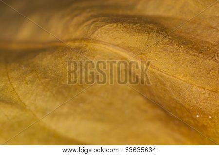 Rotten Leaf Background