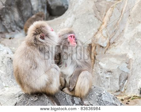 Macaque Sitting On The Rocks