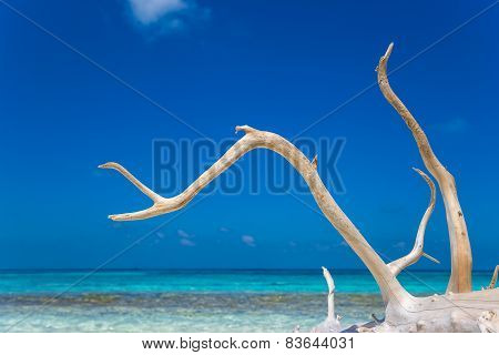 Deadwood On White Sand Beach Of Paradise Island