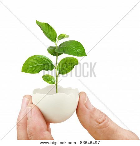 Young Green Plant In An Eggshell