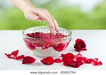 Female Hand, Water Drops And Roses Petals