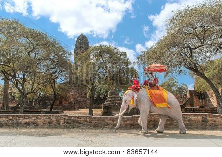 Tourist On Elephant Sightseeing In Ayutthaya Historical Park, Ayutthaya, Thailand