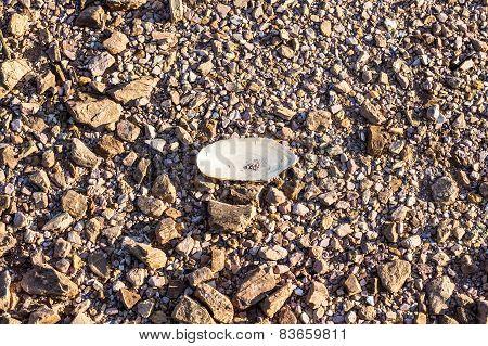 Shells On Gravel