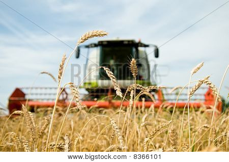 Ripe Wheat With Combine At Background In Field