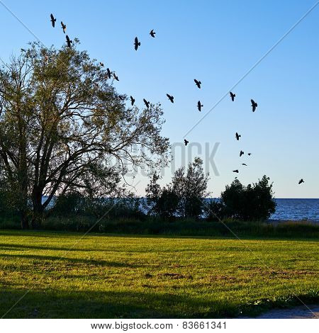 Flock of birds flying to the tree