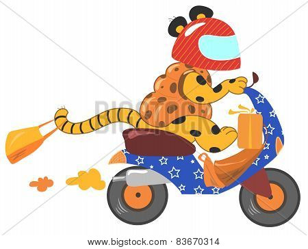 Funny animal driving a vespa scooter