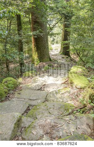 Stone stairway and tree