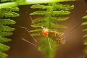 picture of flying-insect  - Small flying insects in the forest on a green fern - JPG