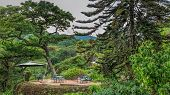 picture of garden eden  - Tables set in a beautiful garden with gigantic trees in the the Mountains - JPG