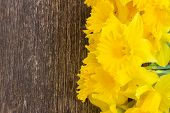 image of daffodils  - bunch of fresh spring yellow daffodils close up on wooden background - JPG