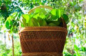 picture of food plant  - a plant or part of a plant used as food typically as accompaniment to meat or fish such as a cabbage potato carrot or bean. ** Note: Soft Focus at 100%, best at smaller sizes - JPG